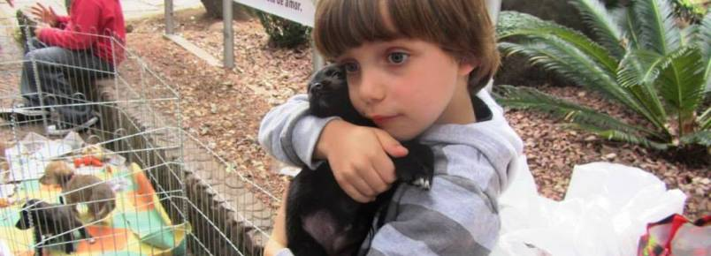 ONG realiza feira de livros para ajudar animais carentes em Santa Cruz do Sul (RS)