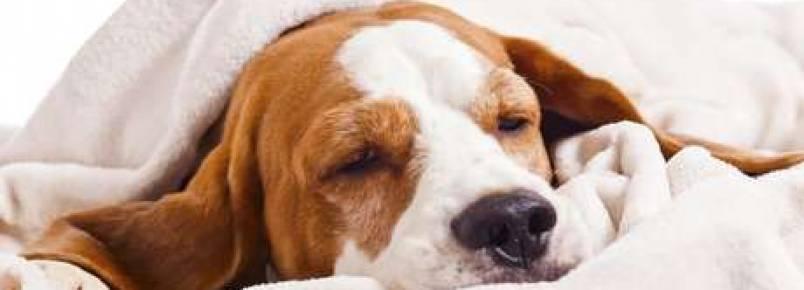 Conheça algumas doenças comuns dos cães e como tratá-las