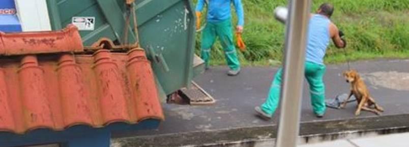 COVARDIA: Motorista que jogou cão no caminhão de lixo é afastado