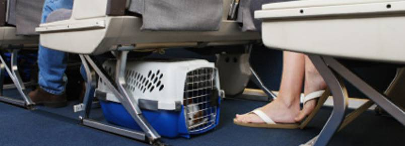 Animais na cabine do avião: atente-se aos procedimentos antes de embarcar