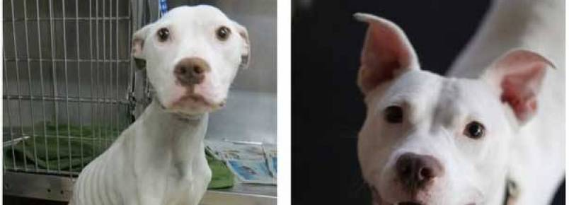 Nove fotos de antes e depois de animais resgatados