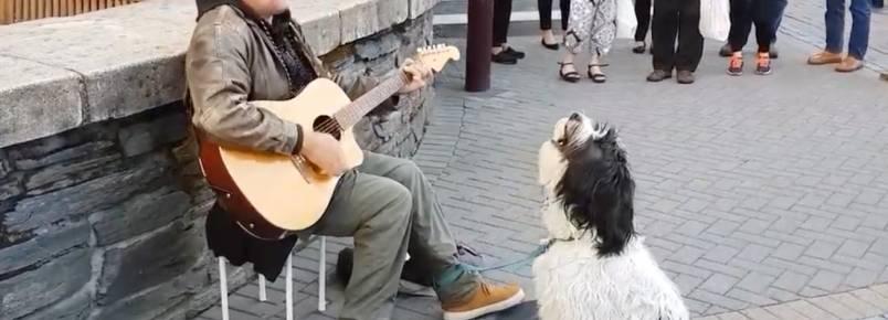 Artista de rua faz dupla com seu cachorro e os dois arrasam nos vocais