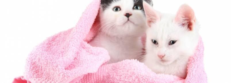 Com que frequência um gato deve tomar banho?