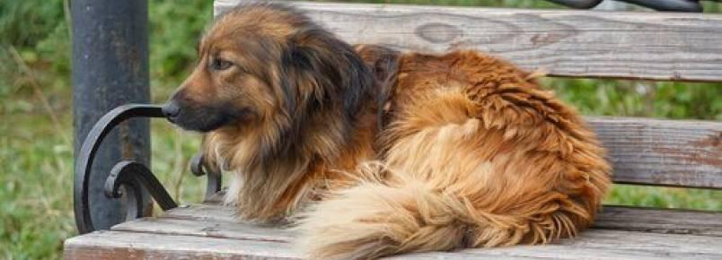 Cães de rua, uma triste realidade que não acaba