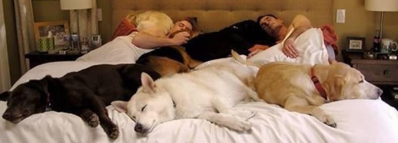 Cama cheia de cachorros