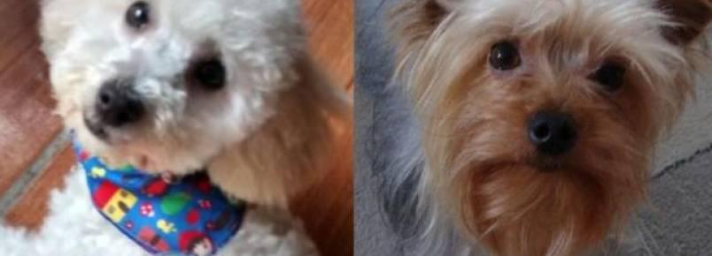 Dois dias depois, família segue procurando cães levados em roubo de carro