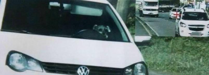 """Cachorro é flagrado por radar """"dirigindo"""" carro em alta velocidade e recebe multa"""