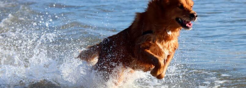 Leve seu cachorro para a praia e passe um ótimo dia com seu amigo
