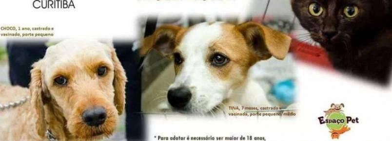 Grupo Animalia realiza feira de adoção de animais em Curitiba (PR)
