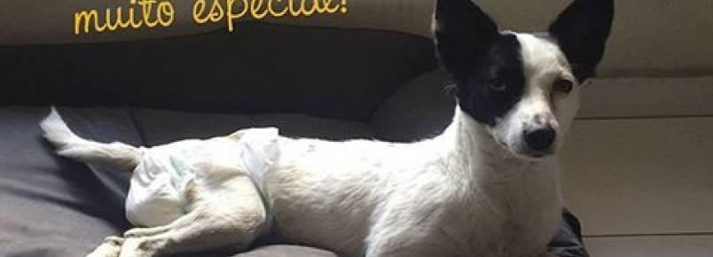 Ampara Animal realiza feira de adoção de cães especiais em São Paulo