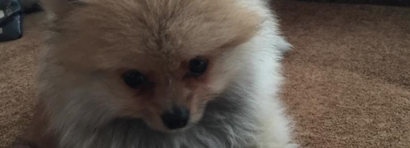 Geraldo Luís apresenta seu novo cachorrinho
