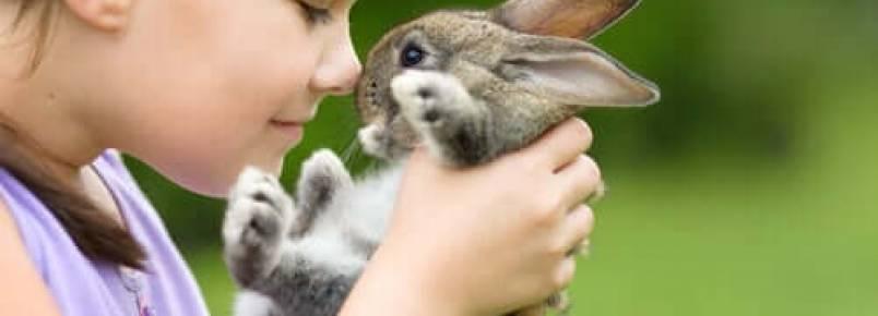 As melhores raças de coelhos domésticos