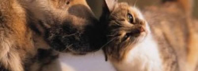 Maus-tratos e abandono de animais serão punidos com multa de até 4 mil reais