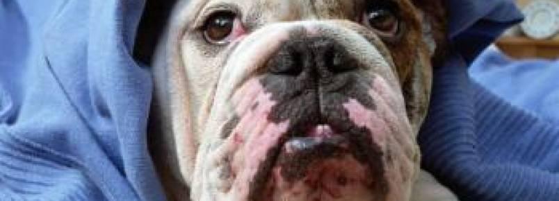 Tuberculose em cães