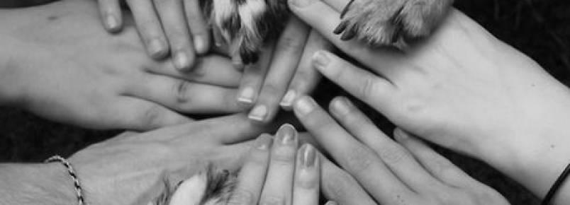 Polícia Civil do Rio lança curso sobre direitos dos animais em parceria com a OAB