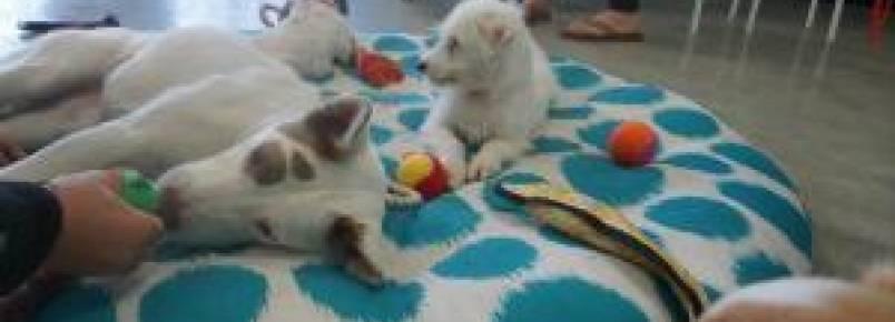 Cafeteria cheia de cães para adoção espera ajudar animais abandonados