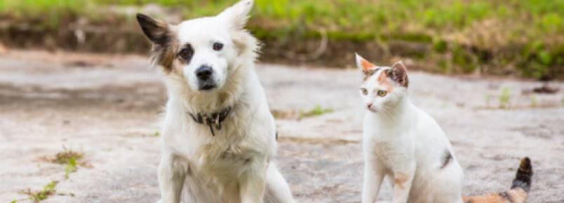 Lei de posse responsável de animais