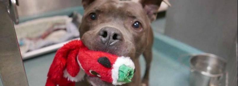 Hank foi adotado! Cachorro que estava na fila da eutanásia encontrou um lar