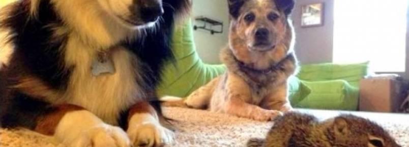 Tutor leva esquilo órfão para casa e cachorros o adotam.
