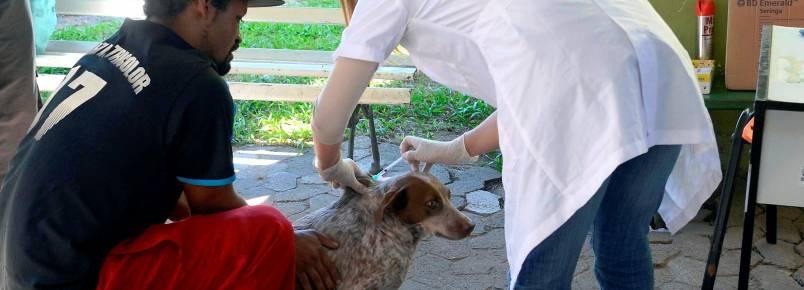 Cães da população em situação de rua recebem atendimento