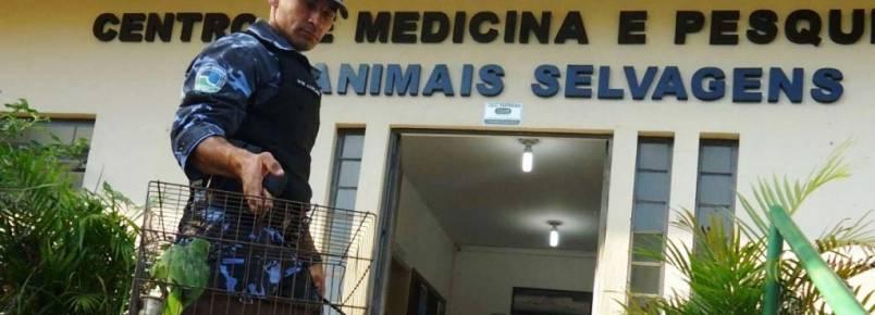 Papagaio é resgatado em Botucatu (SP)