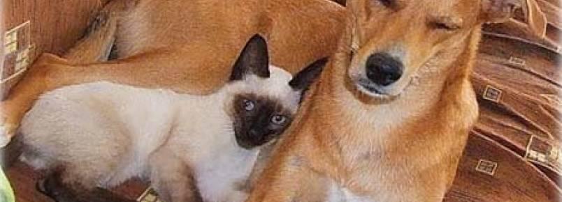 Matar cão ou gato dará 3 anos de cadeia