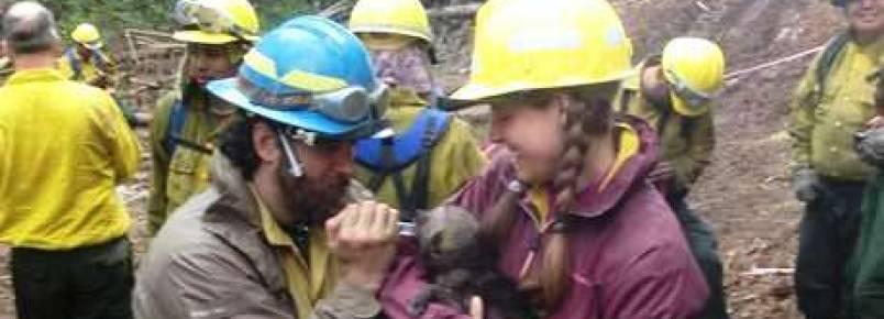 Alasca: filhotes de lobo são resgatados de reserva em chamas