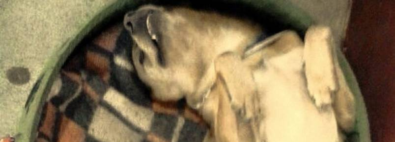 Protetoras de Piraquara ajudam cãozinho a ter uma vida melhor