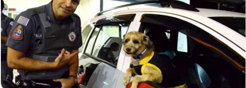 PM adota cão e da nome de Cabo Pitoco