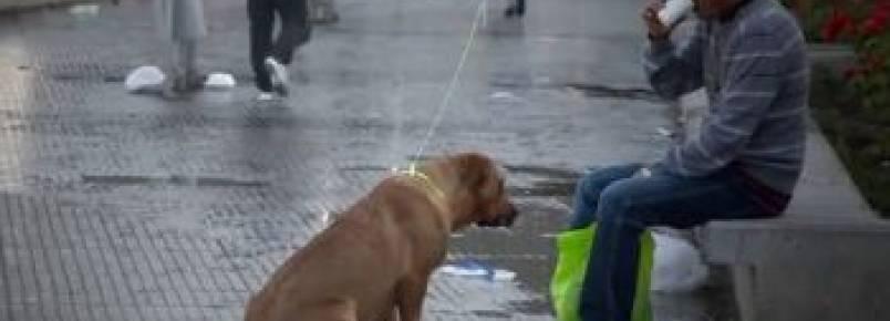 """Cachorros """"invisíveis"""" vistos pela primeira vez"""