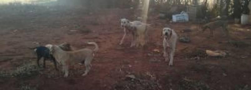 Suipa registra aumento de abandono de animais domésticos no Rio de Janeiro