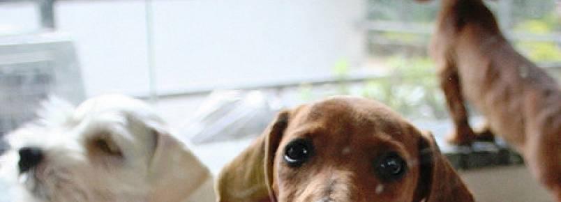 Cãozinho não esconde a alegria ao ser adotado