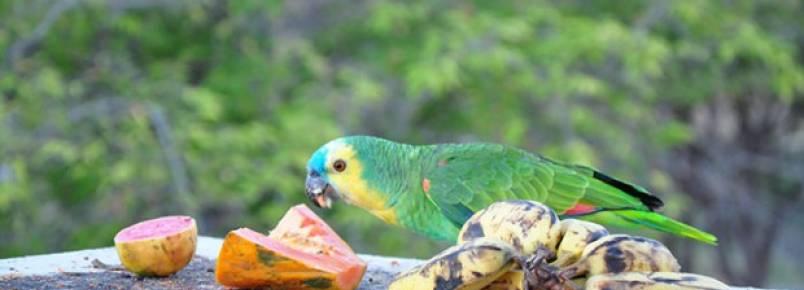 Cinquenta e um papagaios retornaram para a natureza em área conservada em Salgueiro (PE)