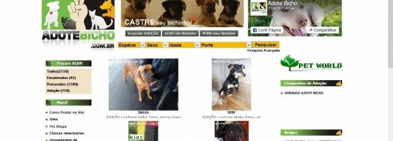 Saiba como divulgar na web animais para adoção, perdidos ou achados