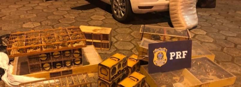 PRF apreende 270 pássaros escondidos em carro em Teófilo Otoni