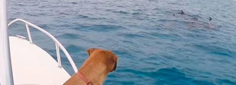 Vídeo incrível mostra cadela nadando em meio aos golfinhos