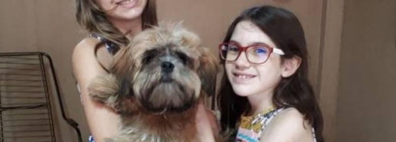 Cachorrinho roubado de pet shop é encontrado e devolvido para a família