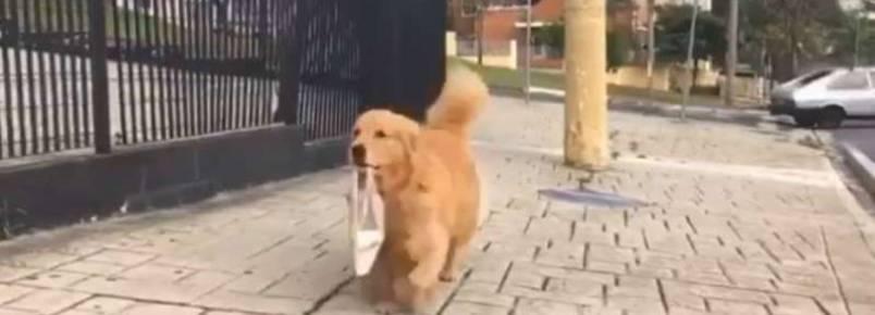 Conheça a cadela que vai buscar pão