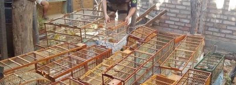 Papagaio ameaçado de extinção e mais 50 aves silvestres são resgatadas na Chapada Diamantina