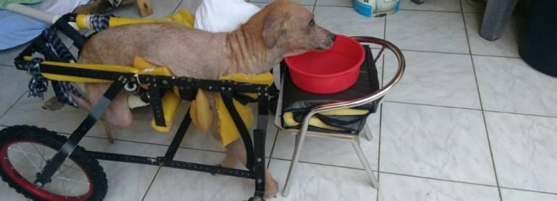 Luta pela vida: Cachorrinho precisa de ajuda em Praia Grande, SP