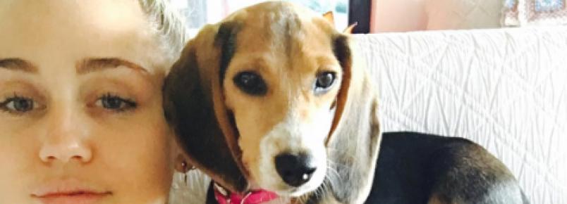 Miley Cyrus adota beagle resgatada de laboratório