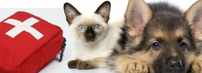 Medicamentos humanos que servem para animais