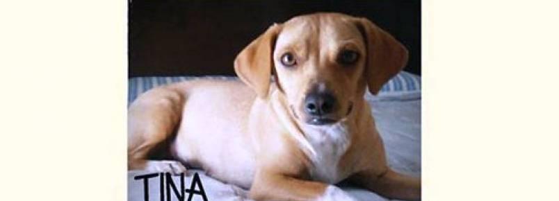 Londrina tem feira de adoção de animais neste sábado