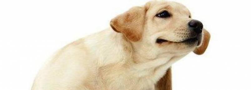 Dr. Alexandre explica: Importância do controle de carrapatos na saúde do cão
